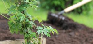 Trädgårdsgruppen – Globalas gröna fingrar